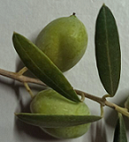 :olive: